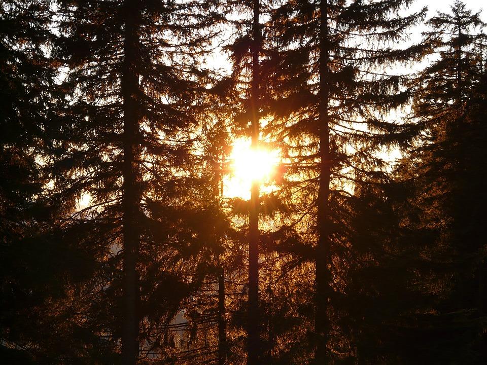 Forest, Tree, Sun, Back Light, Tree Trunks, Mood