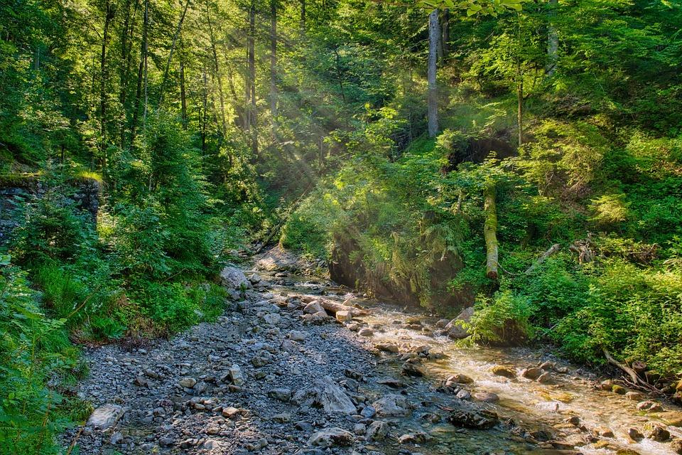 Forest, Nature, Torrent, Bach, Light, Sunlight, Morning
