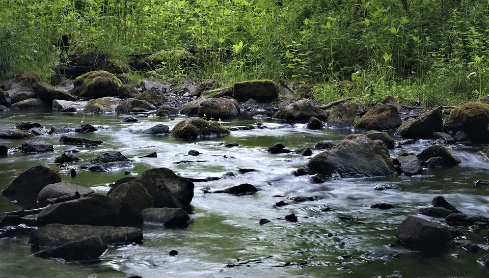 Bach, Water, Nature, Forest, Rock, Creek, Moss, Stones