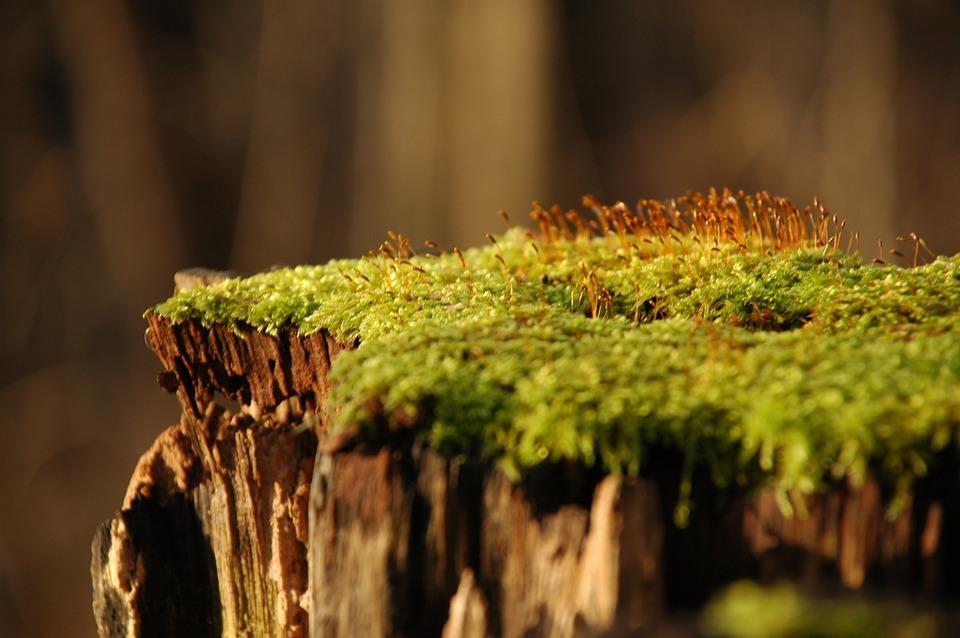 Moss, Forest, Stump, Wood