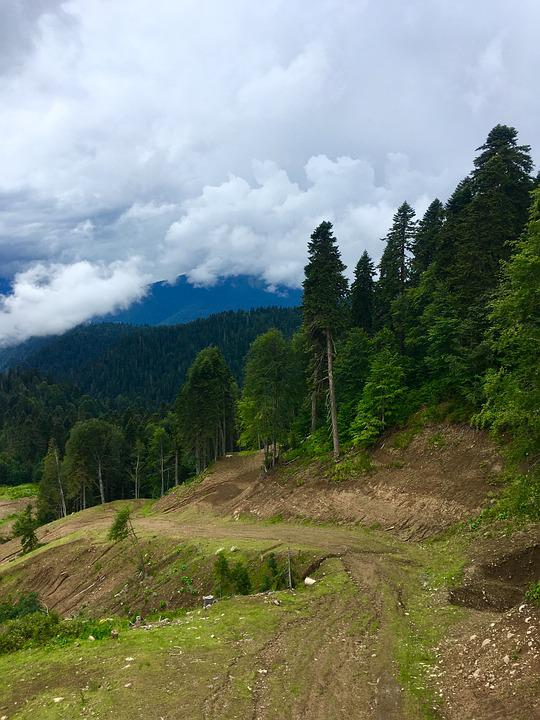 Mountains, Forest, Nature, Clouds, Trees, Beautiful