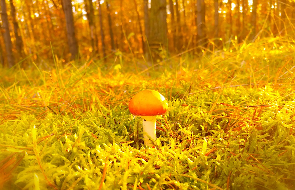 Mushroom, Moss, Forest, Autumn, Seasons Of The Year