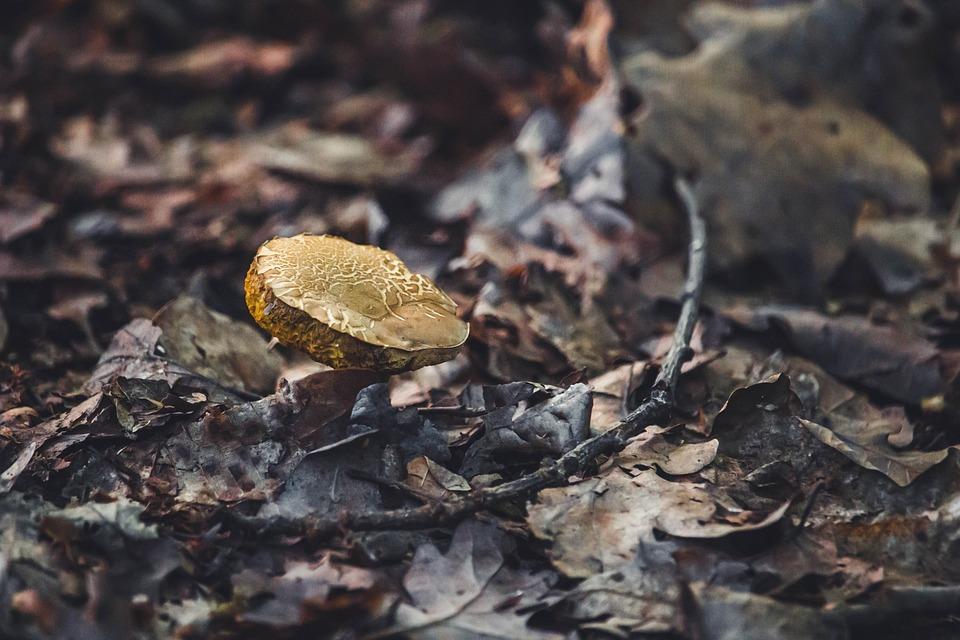 Mushroom, Plant, Leaves, Forest, Nature