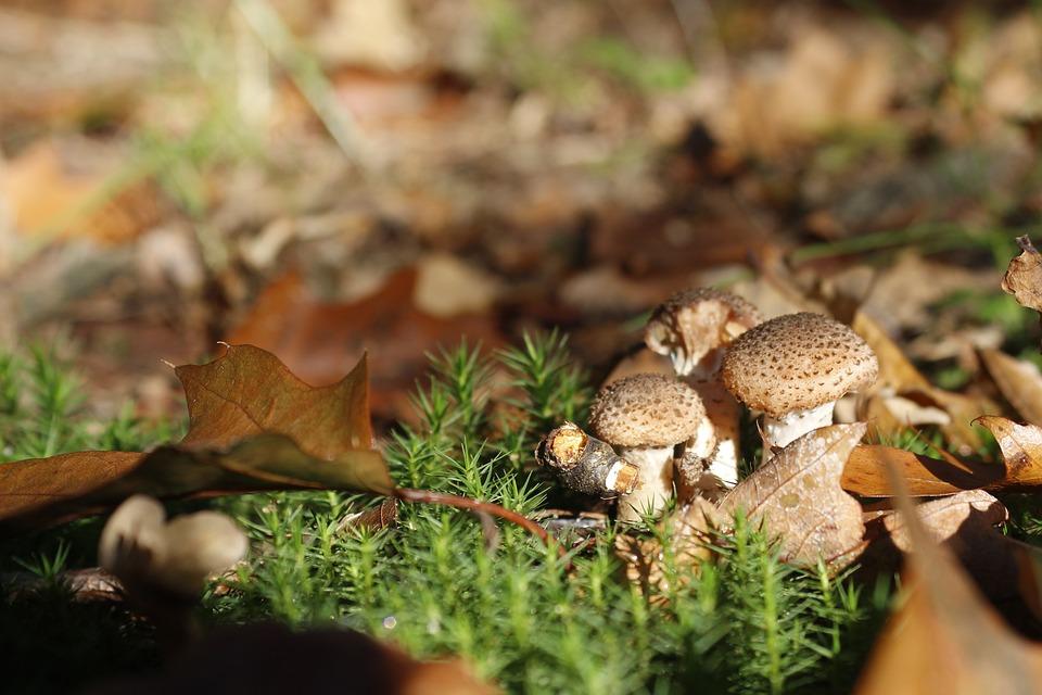 Mushroom, Autumn, Nature, Forest, Outdoor