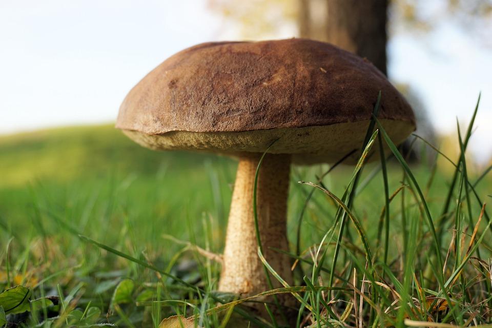 Mushroom, Forest, Autumn, Nature, Mushroom Picking