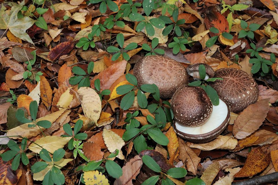 Mushroom, Forest, Nature, The Nature Of The, Natural