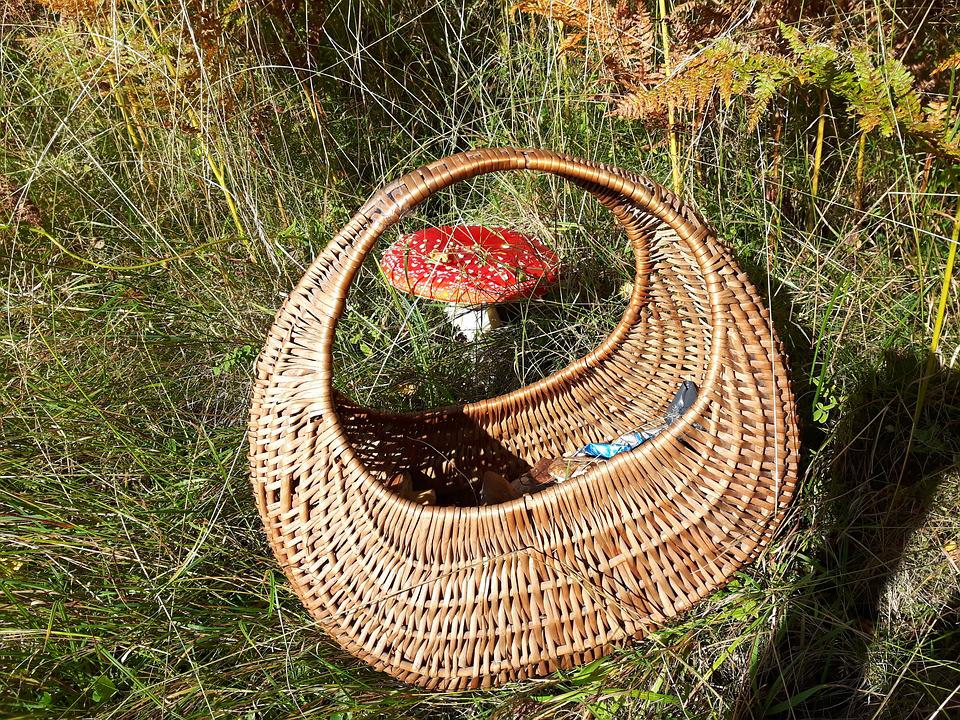 Mushrooms, Amanita, Shopping Cart, Forest, Collect