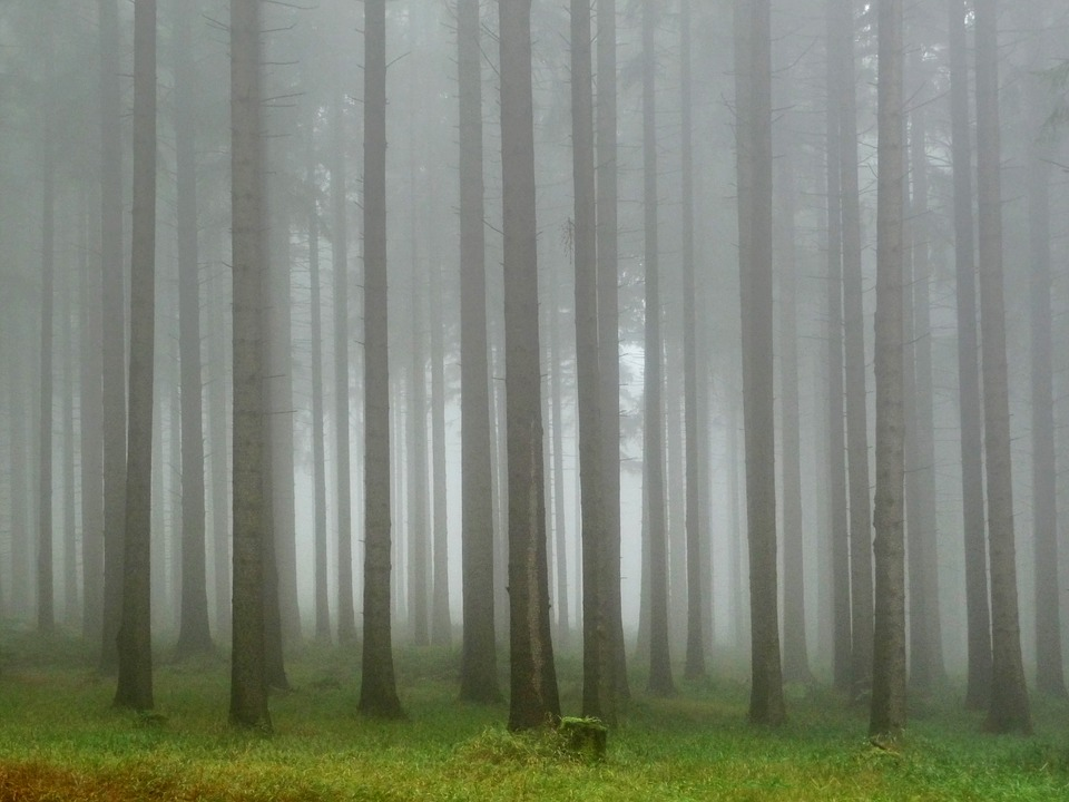 Forest, The Fog, Hiking Trail, Mysterious, Tree