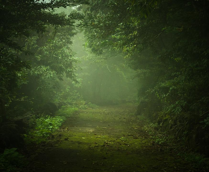 Wood, Forest, Nature, Fog, Light, Mystery, Green