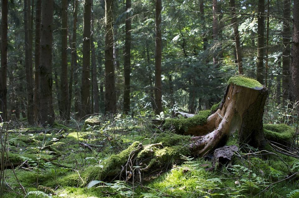 Bodenrod, Landscape, Green, Germany, Forest, Nature