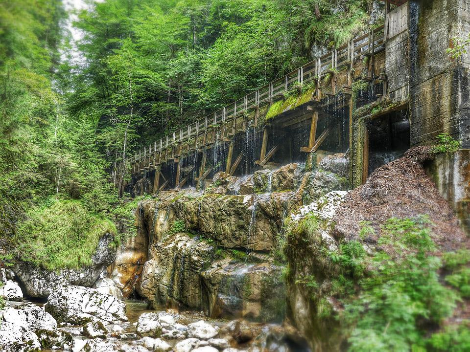 Clammy, Bridge, Moss, Nature, Forest, Flow, Web