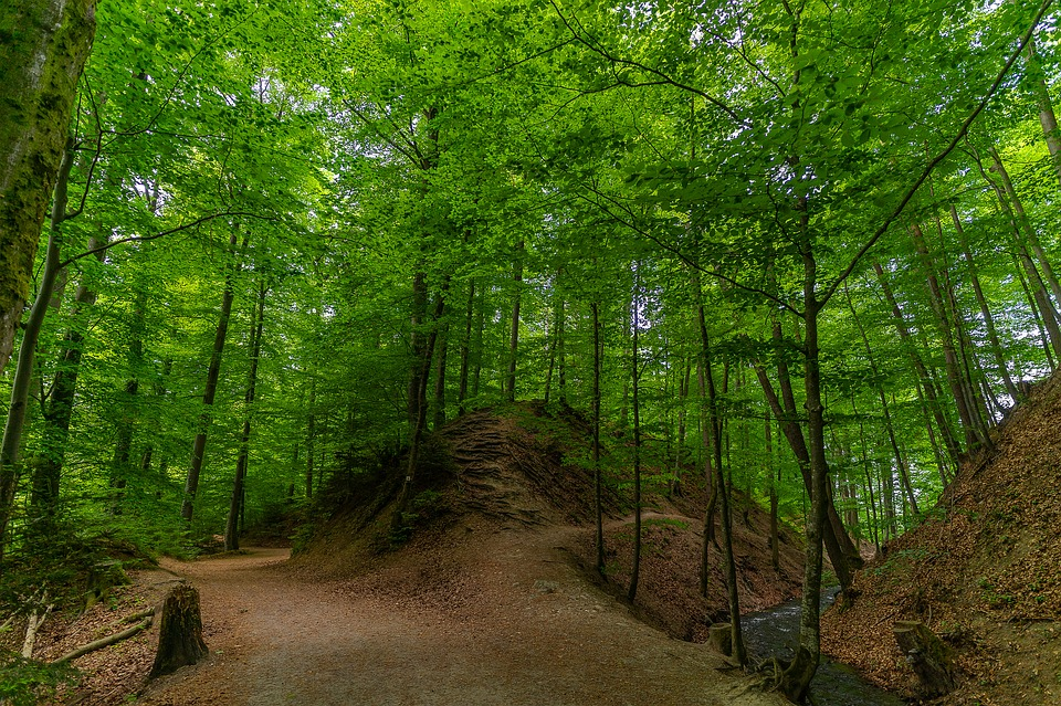 Forest, Nature, Landscape, Trees, Forests