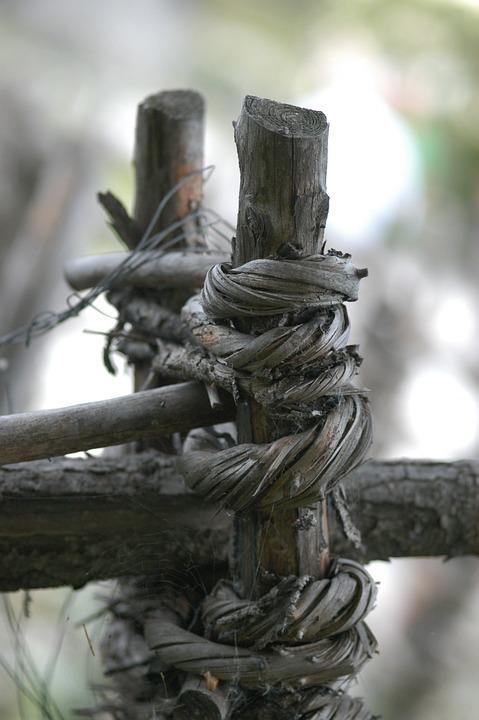 Wood, Forest, Log, Nature, Cracked, Fence, Gnarled