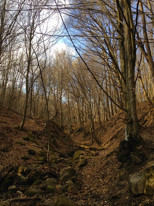 Photo, Nature, Trees, Forest, Hungary, Pilis, Hiking