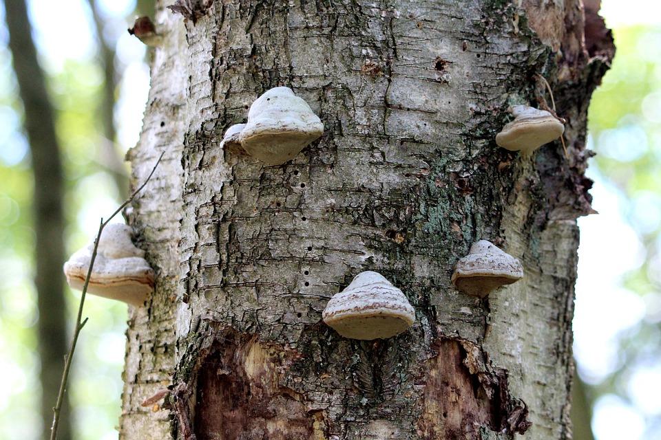 Tree, Mushrooms, Mood, Forest, Nature, Landscape