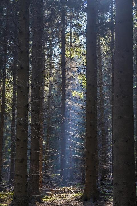Forest, Light, Landscape, Nature, Trees, Autumn