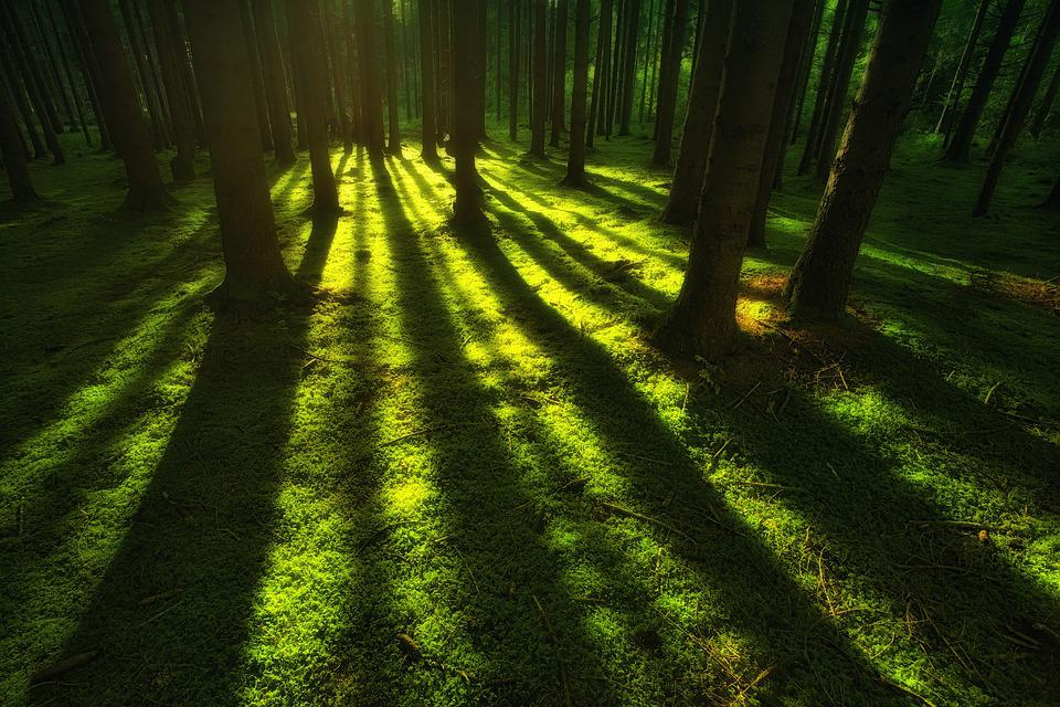 Nature, Forest, Moss, Landscape, Trees, Rays, Green