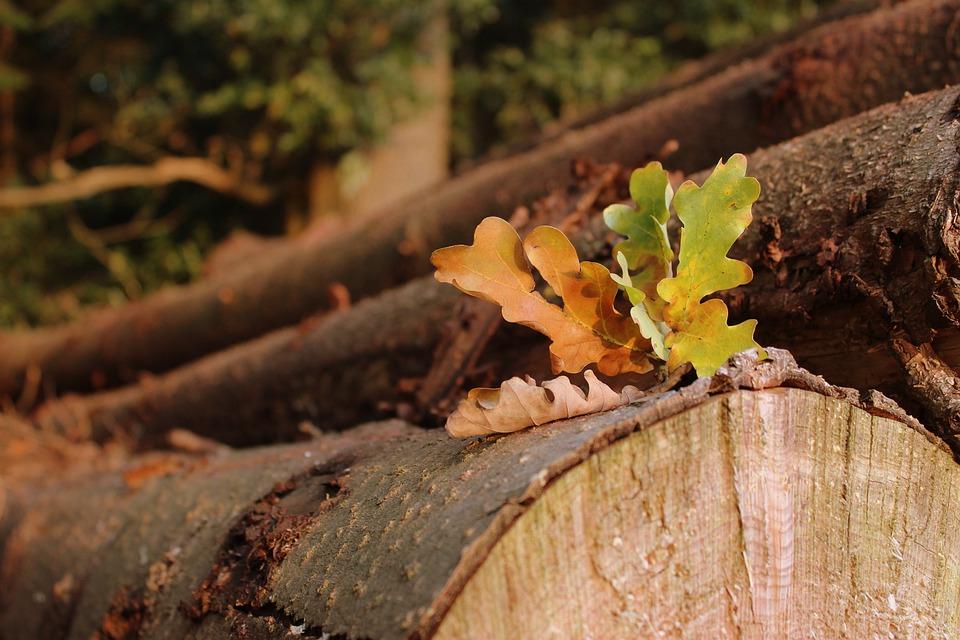Leaves, Autumn Beginning, Autumn, Nature, Leaf, Forest