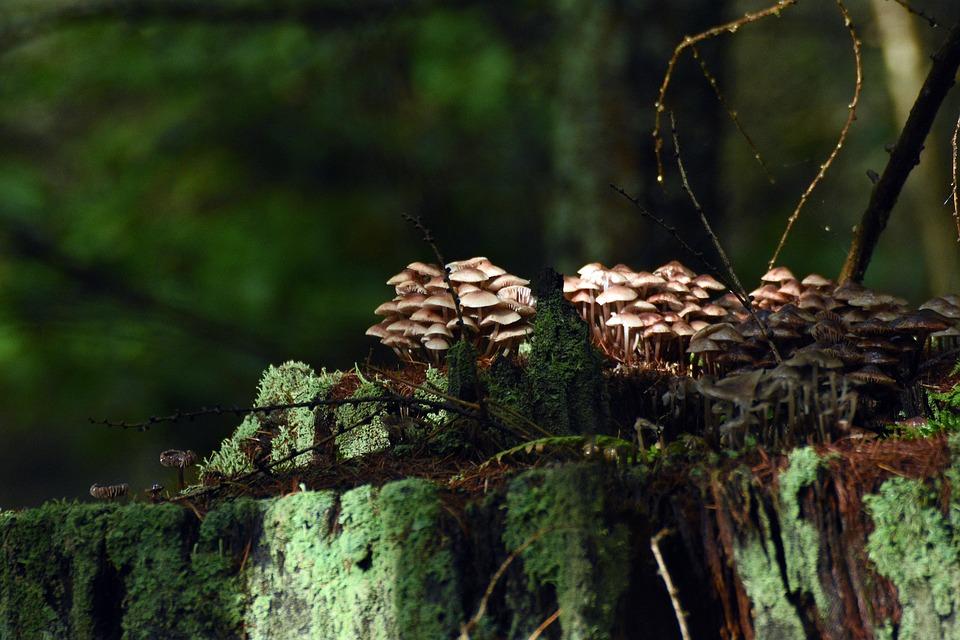 Mushrooms, Forest, In The Fall, Moss, Mushroom, Nature