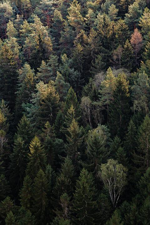 Forest, Nature, Outdoors, Trees, Woods
