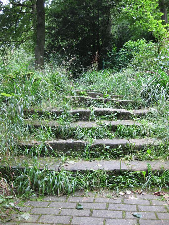 Stairs, Forest, Nature, Stone Stairway, Forest Path