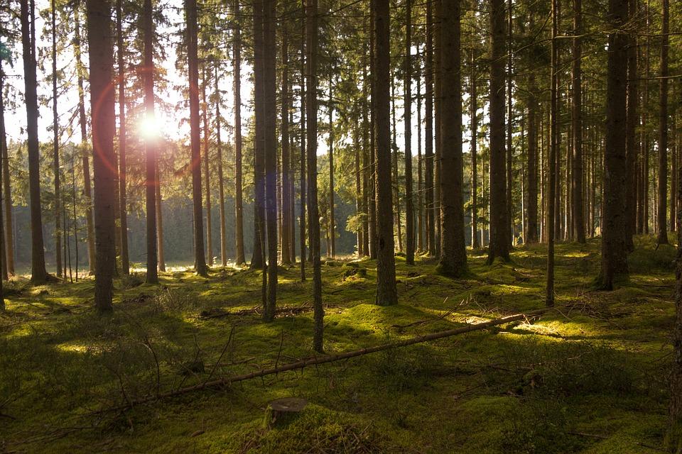Forest, Trees, Light, Sun, Sunbeam, Nature, Autumn
