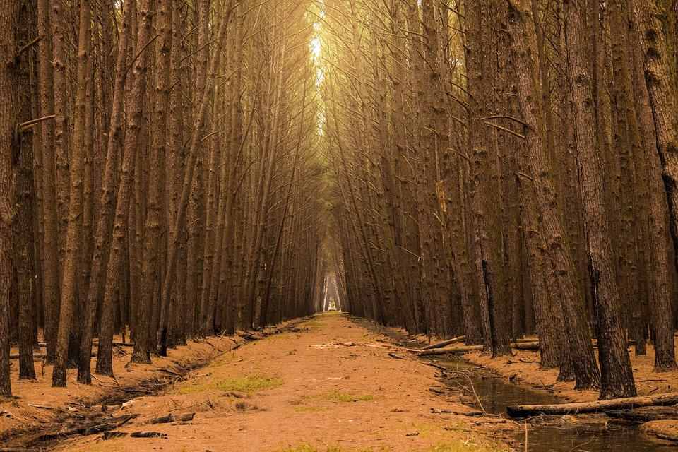 Flying, Forest, Path, Wood, Trees, Garden, Nature