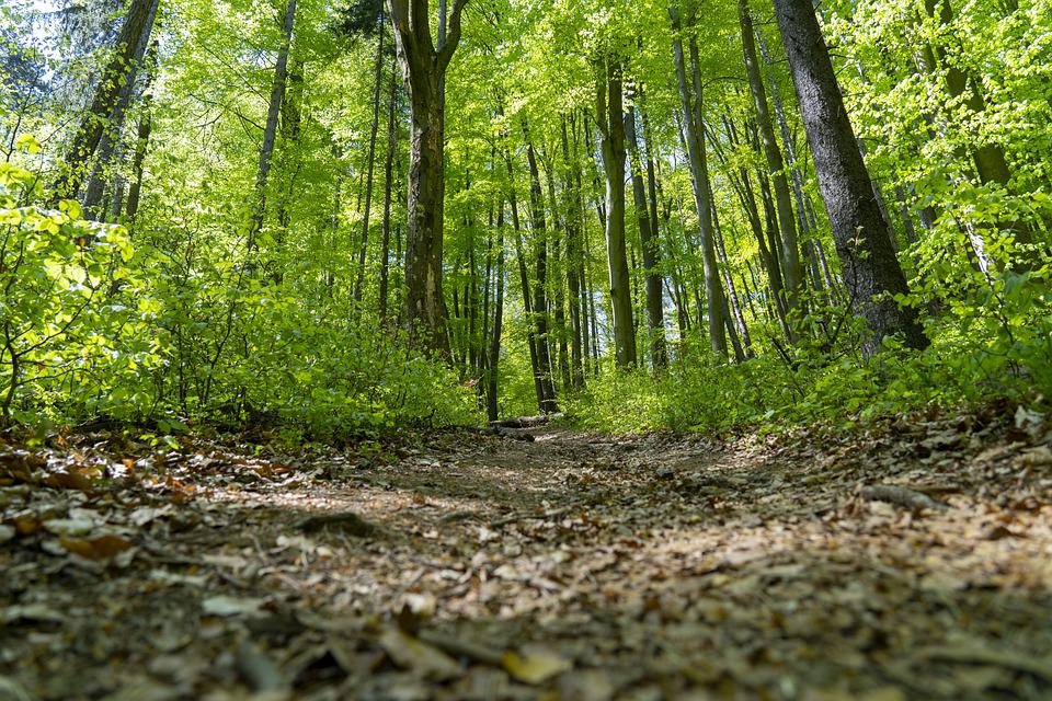 Trees, Forest, Nature, Green, Ground