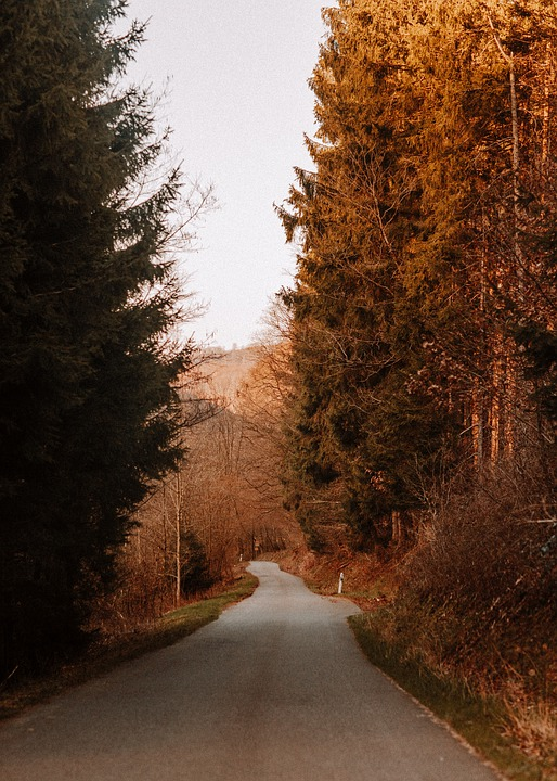 Road, Pathway, Trail, Trees, Forest, Woods, Nature