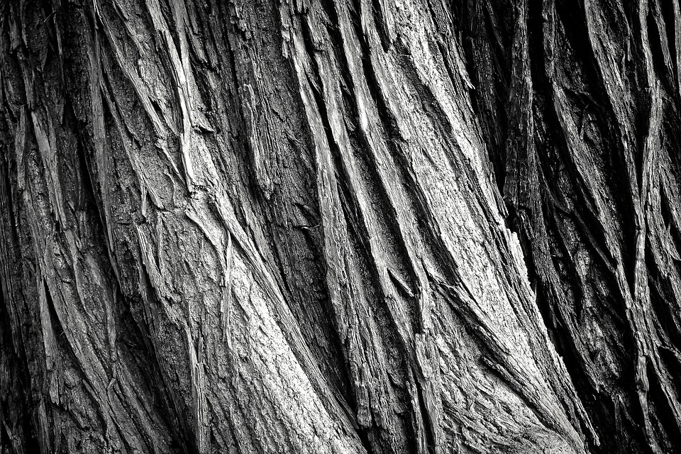 Tree, Tree Bark, Log, Nature, Tribe, Wood, Bark, Forest