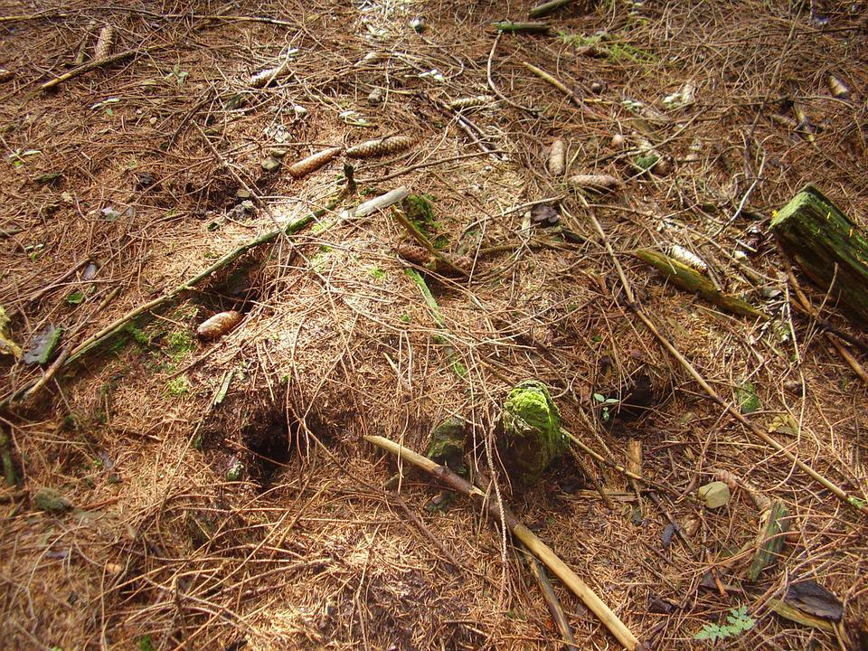 Forest Floor, Forest, Wood, Nature, Needles
