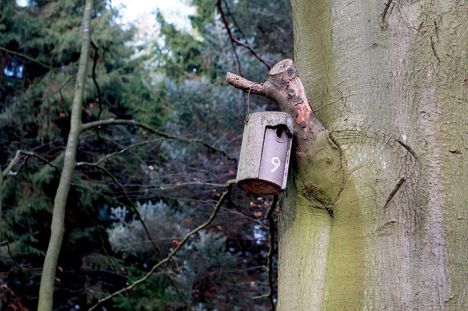 Nesting Box, Aviary, Forest, Tree, Shelter