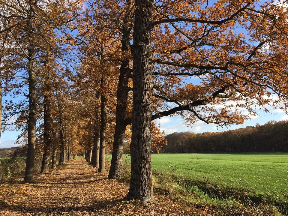 Forest, Netherlands