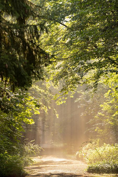 Trees, Forest, Park, Avenue, Path, Hike, Sunlight