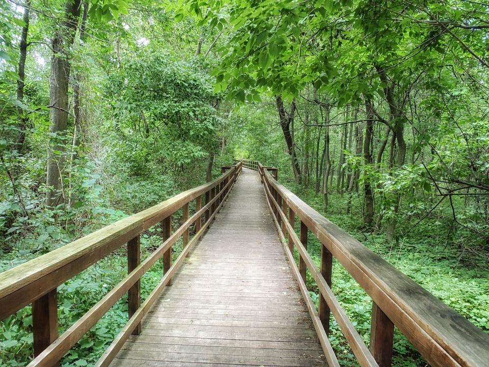 West Seneca, New York, Park, Pedestrian Walkway, Forest
