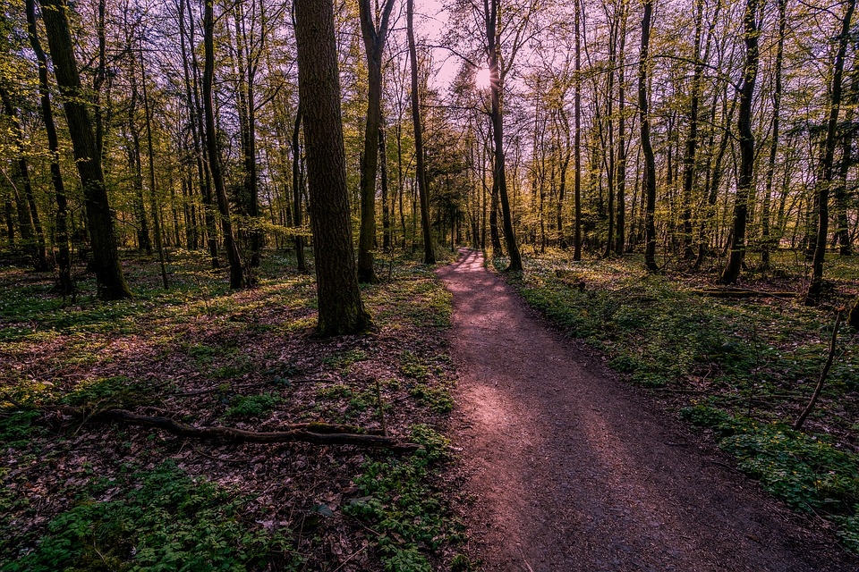 Forest, Away, Nature, Path, Forest Path, Autumn, Hiking