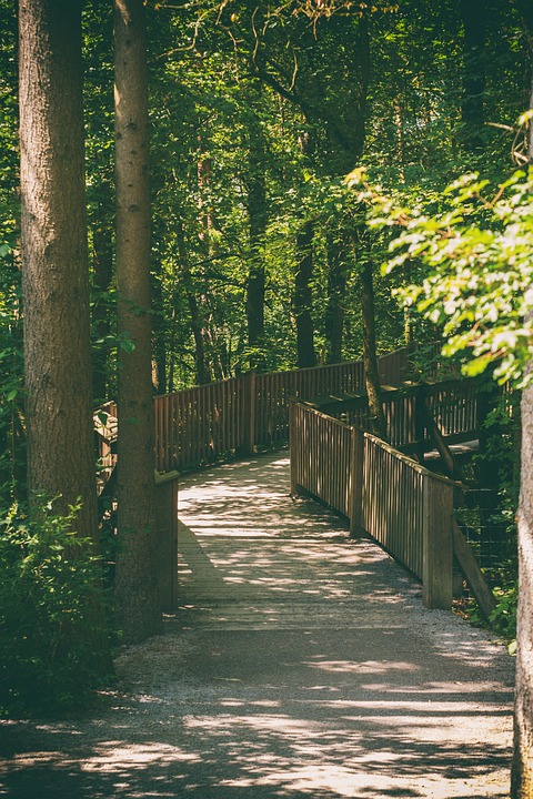Away, Road, Forest Path, Bridge, Web, Forest, Trees