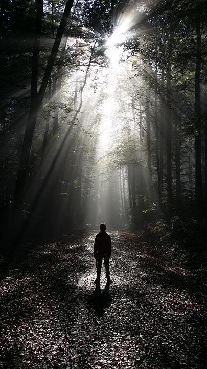 Forest, Fog, Boy, Forest Path