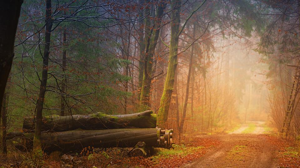 Autumn, Fog, Forest, Tree Trunks, Away, Forest Path