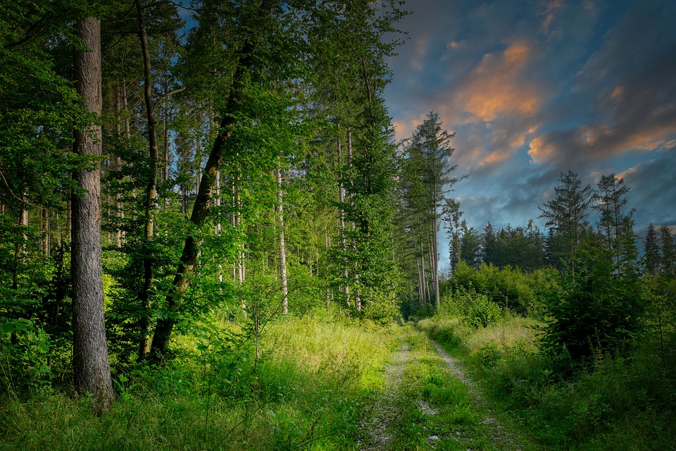 Forest Path, Glade, Forest, Lane, Hiking, Forest Glade