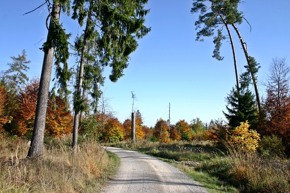 Forest, Forest Path, Nature Park, Schönbuch, Tree