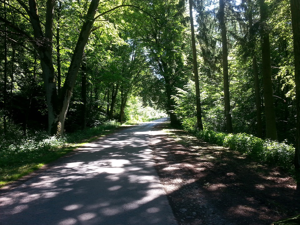 Forest, Forest Path, Road, Atmosphere, Mood