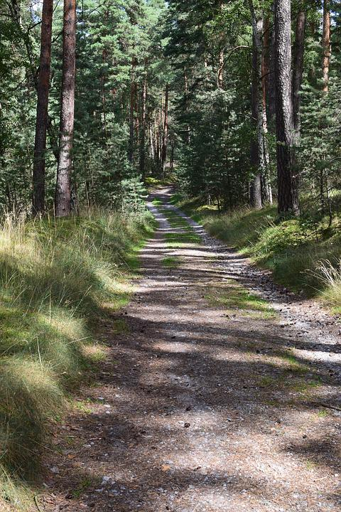 Forest Path, Idyllic, Trees, Nature, Rest, Recovery