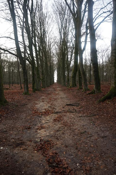 Trees, Path, Forest Path, Nature, Tree, Road, Forest