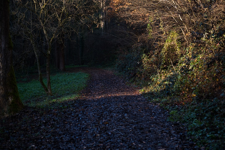 Forest, Away, Nature, Path, Autumn, Trees, Forest Path