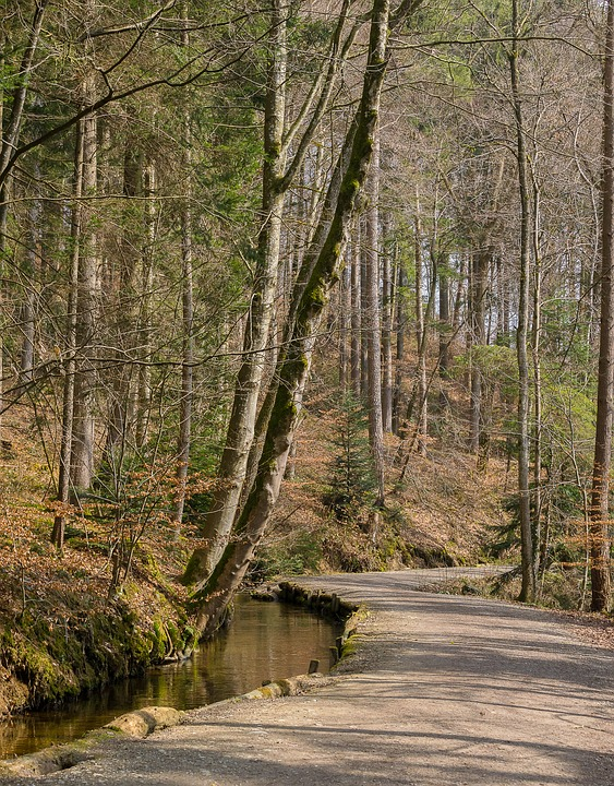 Tree, Wood, Nature, Forest Path, Road, Bach, Background