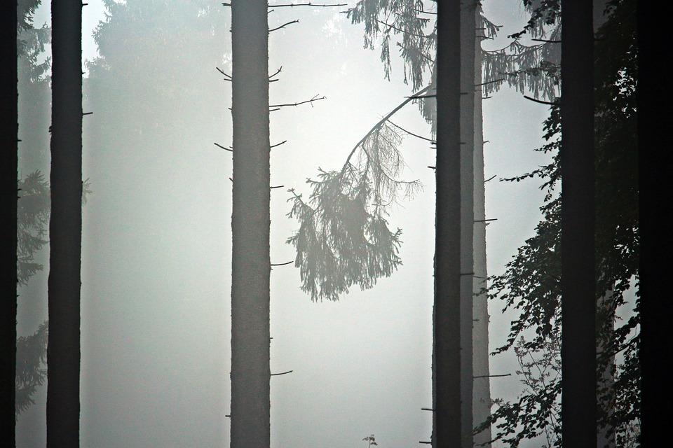 Fog, Trees, Forest, Firs, Pine, Autumn, Gloomy