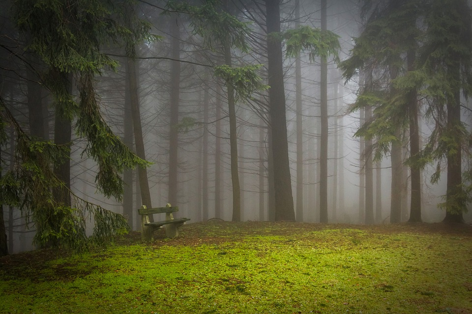 Pine, Forest, Pad, Glade, Misty, Mystic, Pine Wood