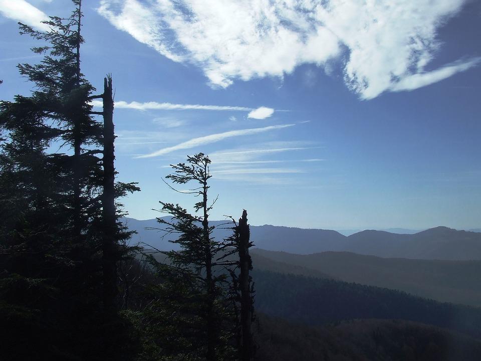 Forest, Nature, Autumn, Nightfall, Pine, Padis-hg
