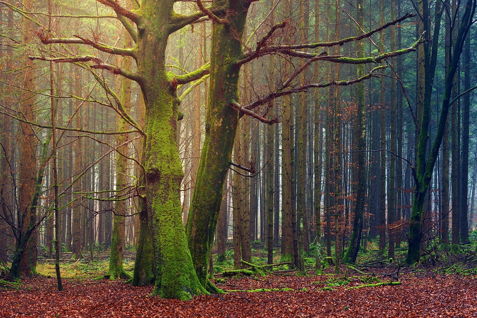 Tree, Autumn, Wood, Leaf, Nature, Green, Forest, Plant